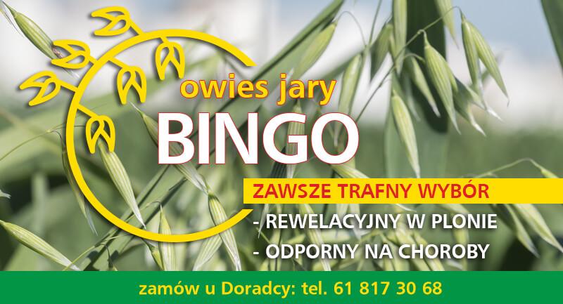 owies-bingo